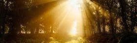 Bild: Waldbaden - Mit allen Sinnen