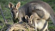 Henno Drecoll Australien - 1.000 Tage - 1.000 Bilder - 1.000 Abenteuer