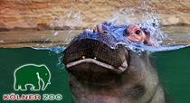 Bild: Tageskarte - Zoo Köln - Tagesticket