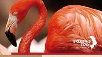 Bild: Flamingo - Patenschaft inkl. Tagesticket