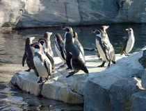 Bild: Eintrittsgutschein  Zoo am Meer Bremerhaven & Nordsee Aquarium