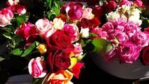 Bild: Blütenzauber