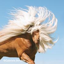 »Pferde – einzigartige Wesen, die unserem Herzen so nahe liegen«