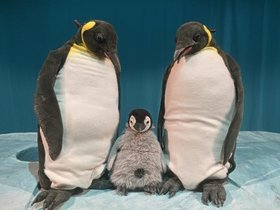 Bild: marotte Figurentheater - Pit Pinguin