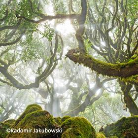 Bild: Fotopodium »Moderne Naturfotografie – neue Bilder, neue Technik, neue Wege«