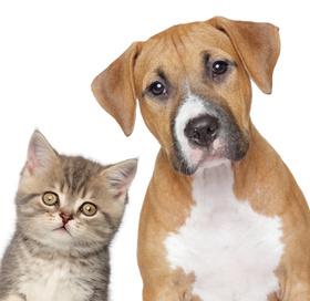 Bild: Internationale Rassehunde und Katzen Ausstellung