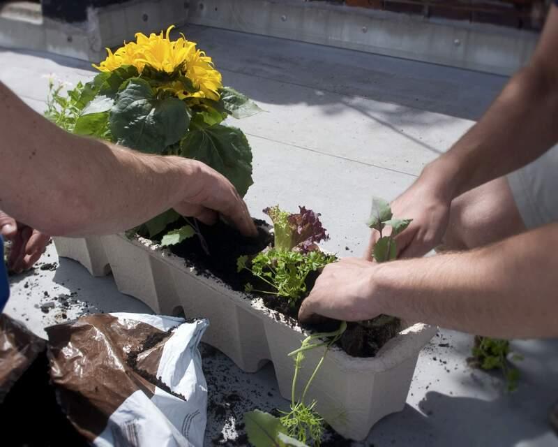 Ab ins Beet! Den Garten mit Pflanzen bestücken - Workshop im Urania Garten