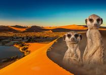 """Bild: Namibia & Botswana – """"Tierisch gut"""""""