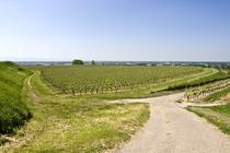 Bild: Stadt | Land | Reben | Wein - Stadt | Land | Reben | Wein