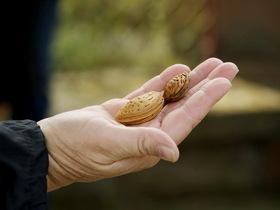 Bild: Auf Floras Spuren - Bad Dürkheim