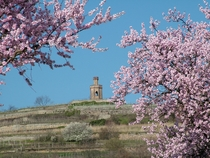 Bild: Frühlings-Genusstour mit Mandeln & Wein - -