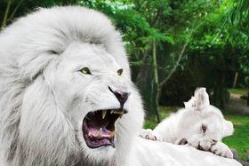 Bild: Eintrittskarte für den Zoo Amnéville