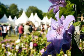 Bild: Gartenfestival Herrenhausen