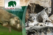 Bild: Jahreskarte - Zoo Köln