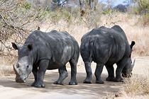 Bild: Südafrika - Norbert Haase