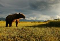 Expedition Erde: Leben unter Bären