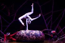 Bild: Cirque Du Soleil - Ovo