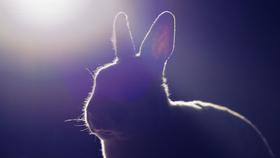 Bild: Weißes Kaninchen, rotes Kaninchen