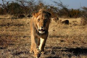 Bild: Namibia / Botswana - Vortrag von Roland Marske