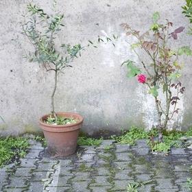 Bild: Die Zofen - ABSAGE von Jean Genet