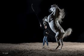 Bild: Pferdetraining Live - mit Elmar Kretz