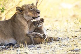 Bild: Sehnsucht Afrika - Auf Safari in Tansania, Botswana, Kenia, Namibia, Zimbabwe und Zambia