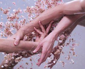 Bild: Open Grounds - Choreografien von und mit den Tänzerinnen und Tänzern der Dresden Frankfurt Dance Company