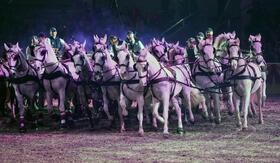 Bild: Im Takt der Pferde