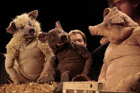 Bild: Drei Schweine - Theater Urknall