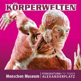 Bild: KÖRPERWELTEN im Menschen Museum Berlin - Facetten des Lebens