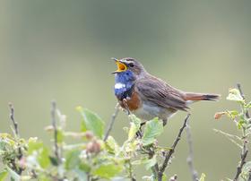 """Radwanderung """"Das Liebesleben der Wald- und Wiesenvögel"""""""