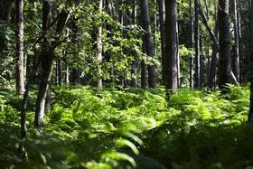 Bild: Den Wald mit 7 Sinnen erleben