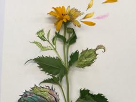 Bild: Blumenfragmente - Botanical Art mal anders