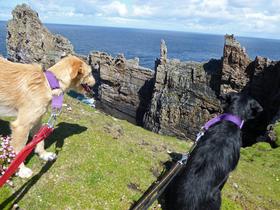 Bild: Irland - Wild Atlantic Way - Live-Multivision mit Andreas Eller - 2600km irische Westküste mit zwei Hunden
