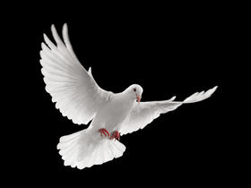 Bild: L'Homme arme: A Mass For Peace - A Concert for Peace - Karl Jenkins