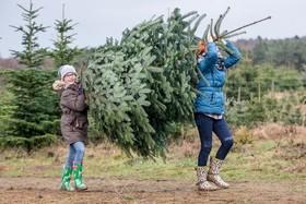 Bild: HaspaJoker Tannenbaumschlagen 2019 - im Wildpark Lüneburger Heide