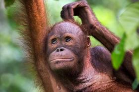 Bild: Borneo - Wunderwelt im Verborgenen - Von und mit Dieter Schonlau