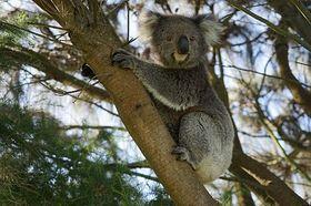 Bild: Australien - Multivisionsshow mit Peter Jaeger