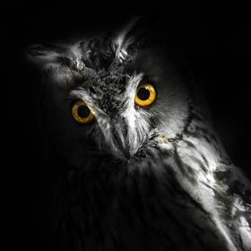 Bild: Geisterstunde im Tiergarten