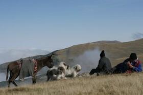 Bild: Project branza - Rumäniens letzte Hirten