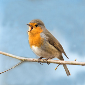 Bild: Das Familienleben der Vögel - Radexkursion