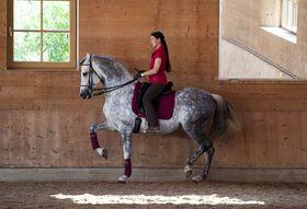 Bild: Anja Beran | Blickschulung - pferdegerechte Ausbildung erkennen