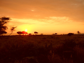 Bild: Afrika