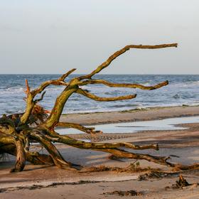 Bild: Wanderung: Dünen, Meer und wilde Tiere - Wildnis erleben am Darßer Ort