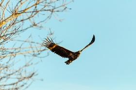 Vortrag und Spaziergang: Wo Adler noch und Stürme jagen - Nationalpark zum Anfassen