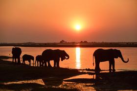 Bild: Namibia Botswana - Wildnis Afrika mit Thomas Sbampato