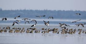 Bild: Ornithologische Wanderung: Vogelwelt am Meer - Ornithologische Wanderung: Vogelwelt am Meer