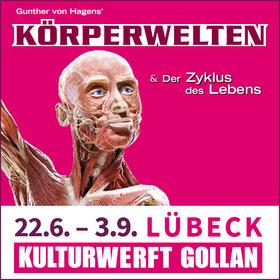 Bild: Körperwelten - Zyklus des Lebens - Lübeck