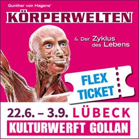 Bild: KÖRPERWELTEN Lübeck - Flex Ticket - Zyklus des Lebens - Flex-Ticket