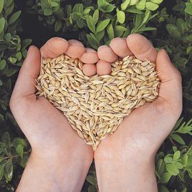 Bild: Online- Version - 5. Bodentag der IG gesunder Boden e.V.